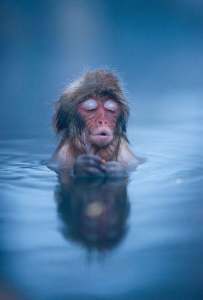 cac4efae3bb790a803dcda16591b11b5--hot-springs-japanese-macaque