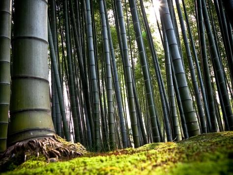 World_Japan_Bamboo_wood_023256_