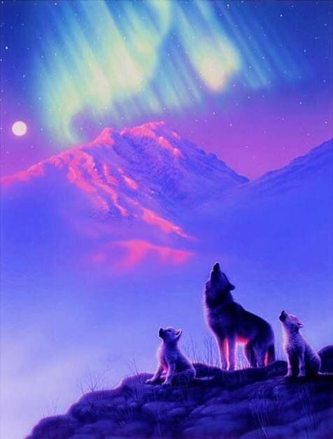 3809ec6dda2881f1e3fdfe8522158cb6--wolf-pictures-wolves-art