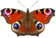 Peacock mimicry