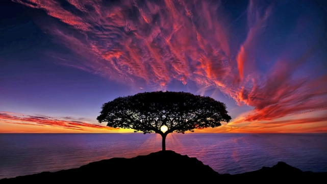 Sunset-tree-silhouette-blue-sky-red-clouds-ocean-horizon