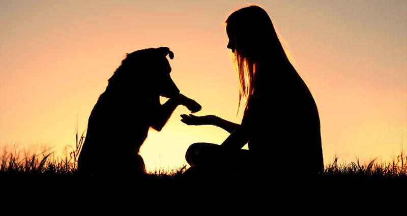 benefits-of-pet-adoption_1024x1024