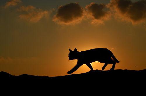cat-at-sunset-by-serkan-sarikef