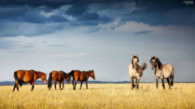 950605-horses-wallpaper-1920x1080-image