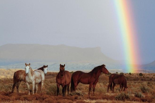 horses-rainbow