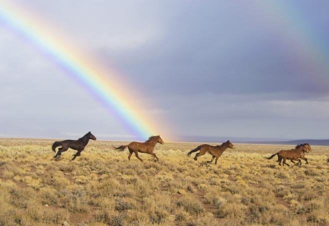 wild-horses-2239420_960_720
