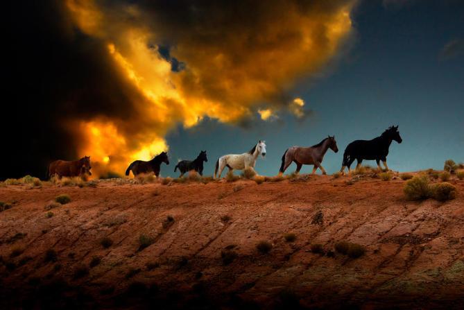 wild-horses-at-sunset-harry-spitz