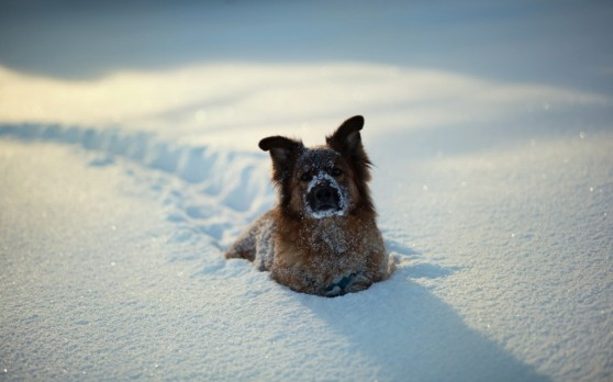 winter-dogs-4-1024x640